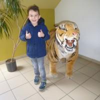 Op bezoek aan het natuurhulpcentrum in Oudsbergen