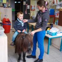 Paard in de klas